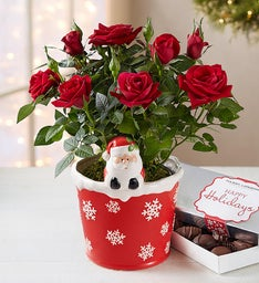 The Magic of Christmas Red Rose