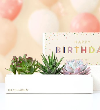 Happy Birthday Succulents by Lulas Garden