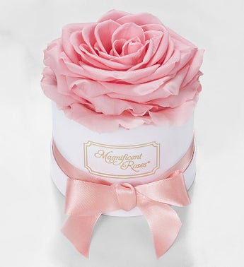 Magnificent Roses Preserved Pink Rose