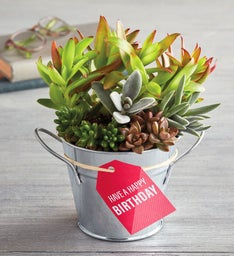 """Have a Happy Birthday"" Succulent Gift"